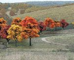 WTR1575 0.75-2in. Fall Deciduous Trees (38 Pack)